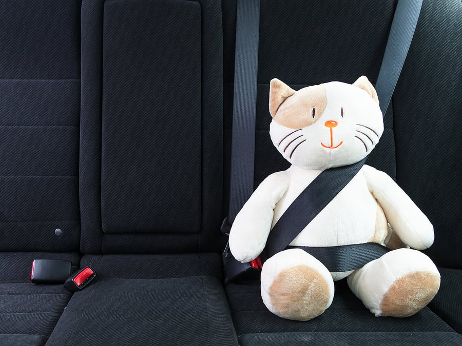 Toy Cat In A Seat Belt