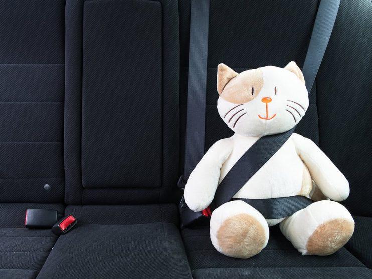 Toy Cat In A Seat Belt