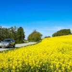 Our Spring Driving Tips…